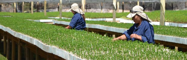 Conaf for Viveros de plantas en lima