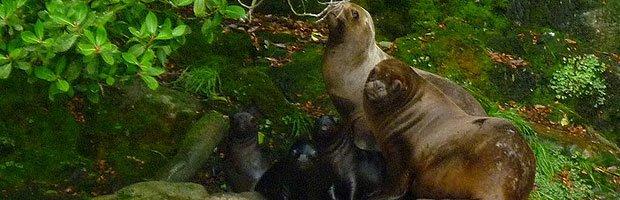 fauna magallanes: