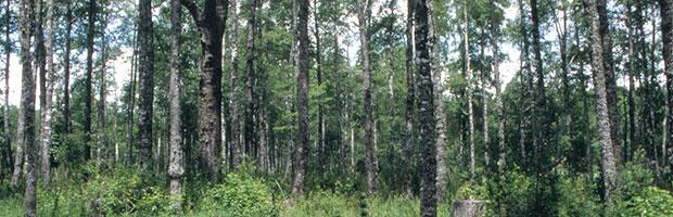 Avanza propuesta participativa sobre relación agua-bosques-plantaciones