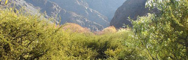 CONAF abre concurso para bonificaciones del bosque nativo