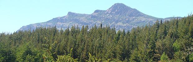 CONAF lanza nuevo documento sobre Derechos del Carbono Forestal en Chile