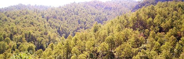 Herramienta web CONAF permite conocer el potencial de biomasa nativa en el país