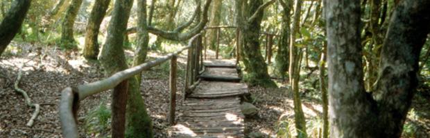 CONAF abrió licitación para mejoramiento de infraestructura en parque Bosque Fray Jorge