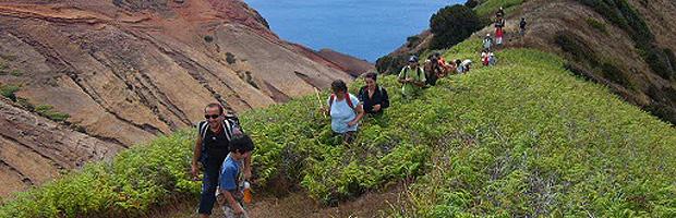 Expertos buscan erradicar zarzamora del archipiélago Juan Fernández mediante hongo