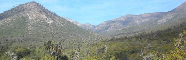 CONAF suspende campismo en sector Ocoa del Parque Nacional La Campana