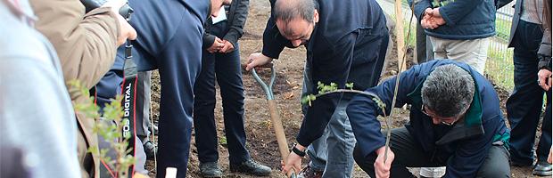 INJUV y CONAF abren postulaciones para proyectos de arborización en todo Chile