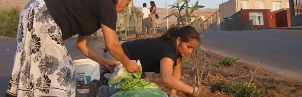 CONAF dicta en Arica taller de arbolado urbano, complemento a entrega de plantas