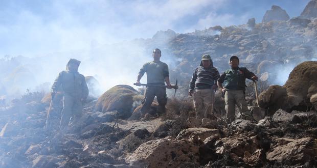 Siete hectáreas y 467 llaretas comprometidas dejó incendio vegetacional.