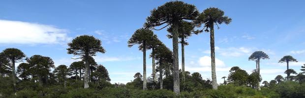 Parques Nacionales de Chile continúan modernizando su gestión
