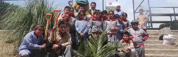 CONAF cumplió su meta de arborización 2014 para la región de Valparaíso