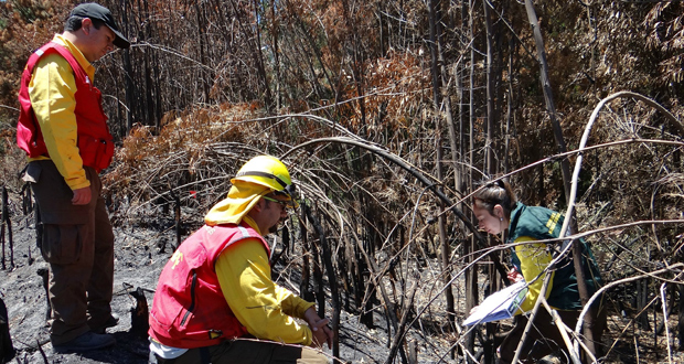 CONAF capacita a técnicos y profesionales en investigación de causas de incendios forestales.