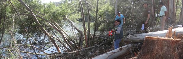 CONAF y Carabineros fiscalizaron tala de bosque en tranque La Luz de Curauma