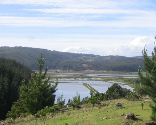 Humedal de Cáhuil, Pichilemu.