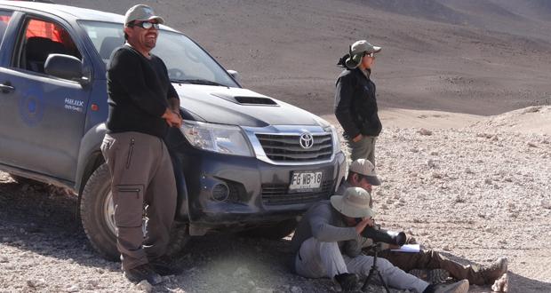 CONAF contó más de nueve mil flamencos en el altiplano de Atacama.