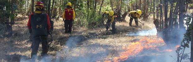 Incendios de Algarrobo y Tucapel cerca de quedar controlados