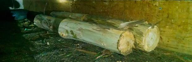Sorprenden a tres personas que cortaban ilegalmente eucaliptus en el Lago Peñuelas