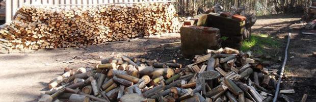 Multan con $ 8 millones a director de sociedad civil por tala de bosque en El Tabo