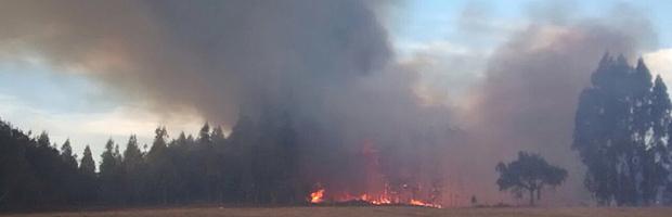 Levantan prohibición de quemas en Atacama, La Araucanía y Los Ríos