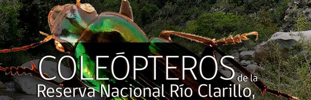 CONAF y UMCE lanzan libro sobre coleópteros en Reserva Nacional Río Clarillo