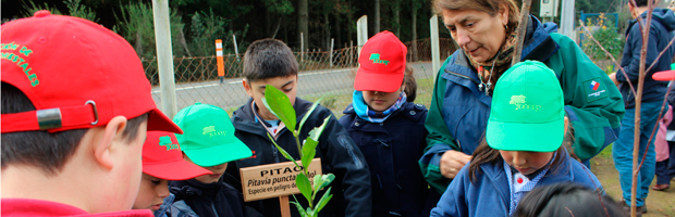 Escuela de Tomé finaliza semestre escolar con actividad de plantación junto a Forestin
