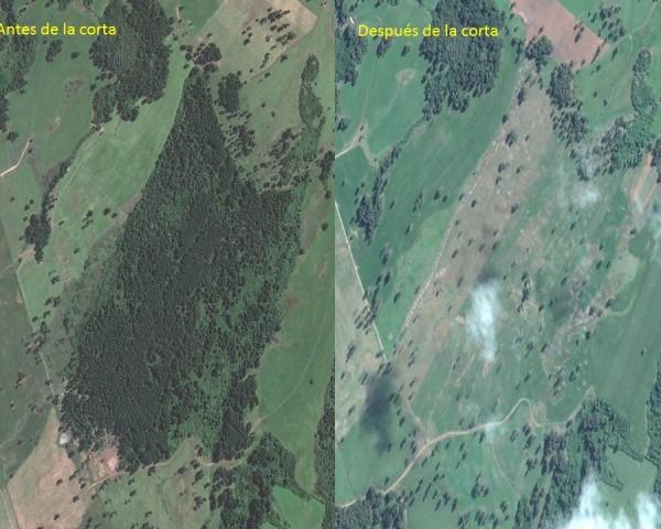 foto corta antes y después