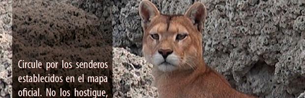 CONAF refuerza control de actividades que perturban fauna silvestre en Torres del Paine