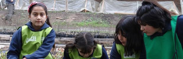 Quilicuranos visitan vivero Buin como parte de Festival de Protección del Árbol