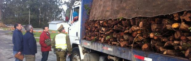 Nueva fiscalización al transporte y acopio de productos forestales en Chiloé