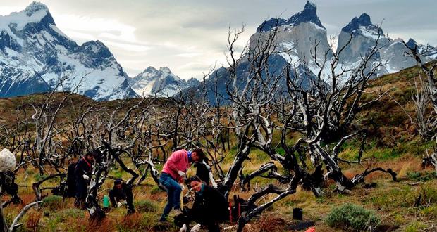 Programa de Voluntarios del Parque Nacional Torres del Paine.