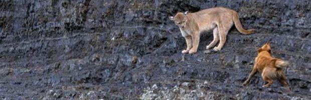 CONAF Valparaíso pide no ingresar con mascotas a parques y reservas nacionales