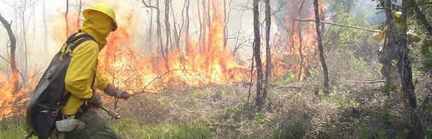 COE Biobío coordina acciones conjuntas ante próxima temporada de incendios forestales