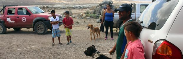 Plan de control de amenazas al guanaco termina con éxito en Llanos de Challe