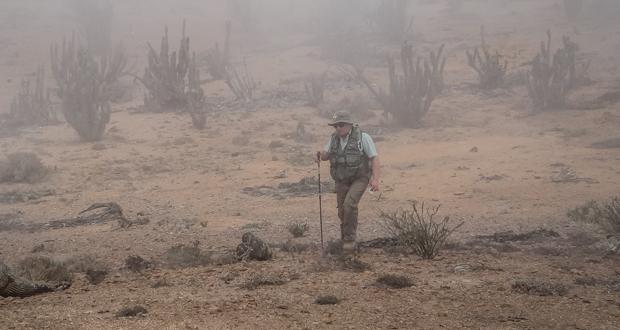 CONAF realiza el censo estival de Guanacos en tres parques nacionales de Atacama.