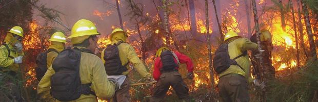 Chile logró disminuir superficie afectada por incendios forestales en período 2015-2016