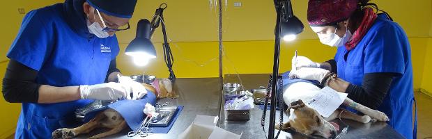 Operativo de esterilización y sanidad animal en Parque Nacional Vicente Pérez Rosales