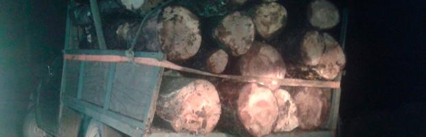 Hombre detenido por robo de madera nativa al interior de Reserva Nacional Nonguén