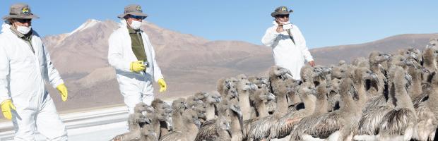 Chile sigue reforzando su gestión en conservación de sus áreas silvestres protegidas