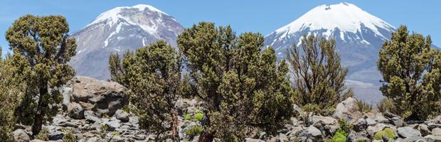 Catastro vegetacional reveló que Arica y Parinacota tiene casi 50 mil ha. de bosques