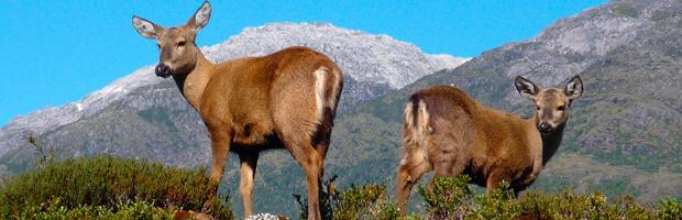 Chile celebra el Día Internacional de los Parques Nacionales