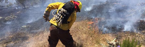 CONAF lamenta muerte de tres brigadistas en combate de incendio Forestal en Vichuquen