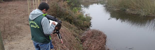 CONAF detecta tala ilegal de 129 árboles nativos en humedal de Mantagua