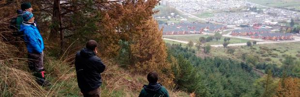 Positivo avance en restauración ecológica del Cerro Divisadero