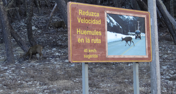 En la población de huemules asociada a la ruta 7 en la Reserva Nacional Cerro Castillo, donde se estiman entre 30 y 40 animales, la mayoría no exhibe en la actualidad signos de la enfermedad.e la población de huemules asociada a la ruta 7 en la Reserva Nacional Cerro Castillo, donde según monitoreos se estima entre 30 y 40 animales, la mayoría de los cuales no exhibe en la actualidad signos de la enfermedad.