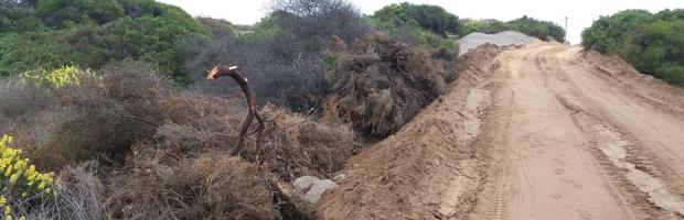 CONAF detecta eliminación ilegal de bosque y formaciones xerofíticas en Ritoque