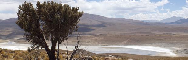 Invitan a celebrar Día de la Montaña con trekking al cráter de volcán Isluga