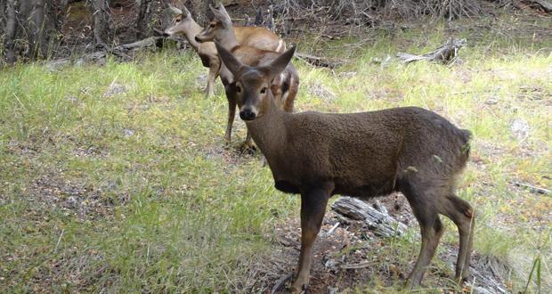 Según estudios de CONAF, por ejemplo, el hábitat del huemul se vería incrementado en unas 200 mil hectáreas.