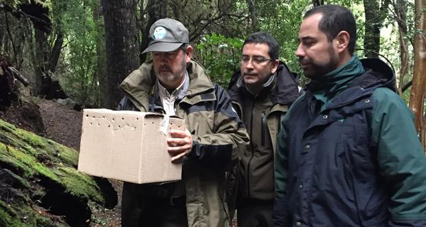 Monitos del Monte fueron liberados en el sendero Ñirrinco.