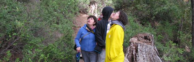 CONAF promueve visitas responsables a parques nacionales en las fiestas patrias
