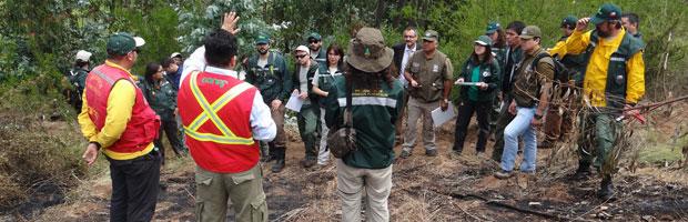 CONAF conforma unidad de análisis de causas de incendios forestales