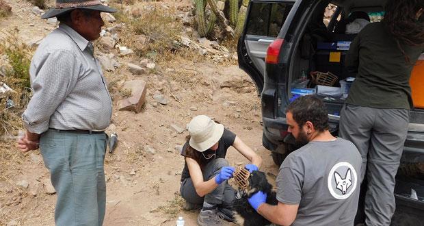 La actividad se enmarcó dentro del programa de Control de Amenazas de CONAF, que desde el 2015 se ejecuta en el Parque Nacional Volcán Isluga.
